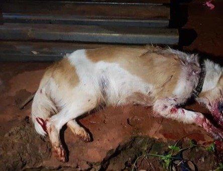 Cão não resistiu e morreuFoto: ONG Abrigo dos Bicho