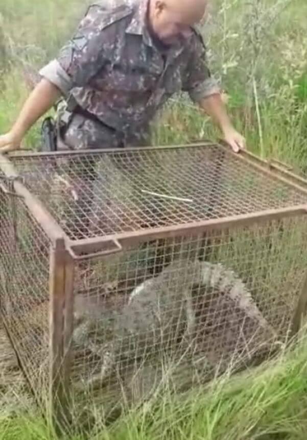 Animal foi capturado pela PMA